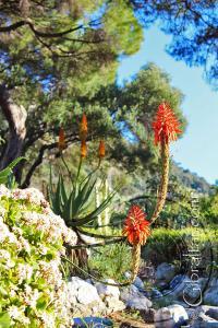 Jade plant and tree aloe Alameda Gardens