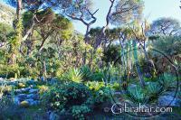 Various cacti in the Alameda Gardens