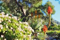 Árbol de Jade y Alóe,Jardines Alameda