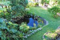 Estanque de carpas koy, Jardín Botánico de la Alameda, Gibraltar