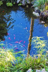 Estanque de carpas koy, Jardín Botánico de la Alameda