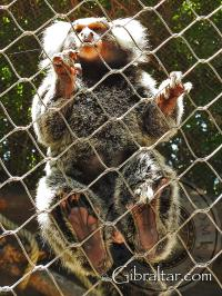 Cotton Top Tamarin Feet at Alameda Wildlife Conservation Park