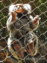 Cotton Top Tamarin Feet at Alameda Wildlife Conservation Park