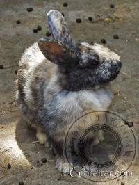 Rabbit at the Alameda Wildlife Conservation Park