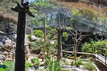 Paseo a través de la exhibición de Lémures en el Parque de Conservación de la Vida Silvestre Alameda