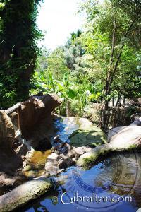 Arroyo del hábitat de las nutrias en el Parque de Conservación de la Vida Silvestre Alameda