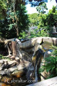 Hábitat de las nutrias en una cascada de agua, Parque de Conservación de la Vida Silvestre Alameda