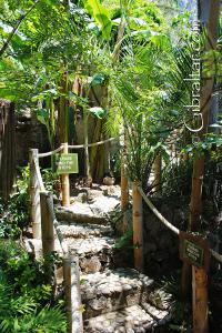Senderos de cuerdas en el Parque de Conservación de la Vida Silvestre Alameda
