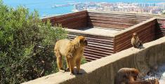 Apes Den in Gibraltar