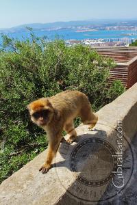 Apes Den y la Bahía de Gibraltar de fondo