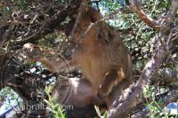 Mono sentado en un árbol en Apes Den