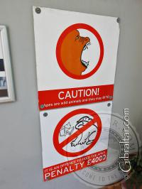 Penalty fine if feeding monkeys
