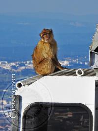 Mono y Teleférico
