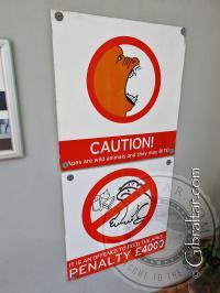 Multa de penalización si se alimenta a los monos