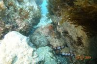 Dive Charters Gibraltar