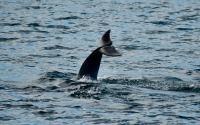Dolphin Adventure