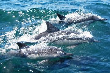 Avistamiento de Delfines y Ballenas en Gibraltar