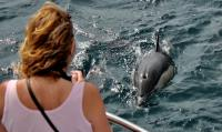 Dolphin Safari