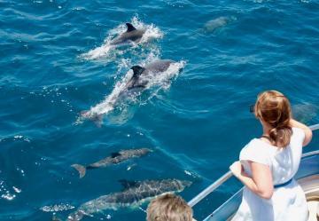 Dolphin Safari en Gibraltar