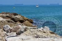 Eastern beach rock pier and seagull in Gibraltar
