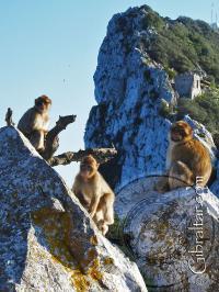 Tres monos de Gibraltar en la parte superior de la Roca