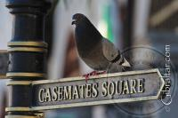Grand Casemates Square Signpost