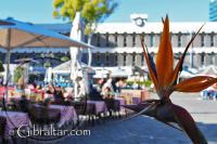 Restaurantes en la Plaza Grand Casemates, Gibraltar