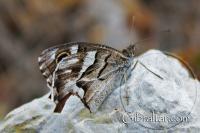 Butterfly along the Mediterranean Steps