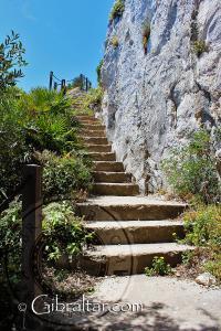 Dwarf Palms The Mediterranean Steps