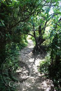 The Mediterranean Steps Dense Vegetation