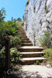 Palmeras enanas, Escalera del Mediterráneo