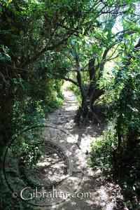 La densa vegetación en la Escalera del Mediterráneo