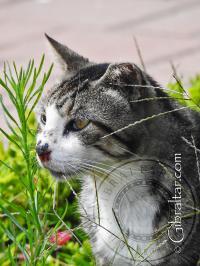 Cute cat at Sandy bay beach in Gibraltar
