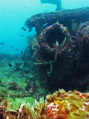 Scuba Diving in Gibraltar