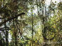 Vegetación de la Reserva Natural de Upper Rock