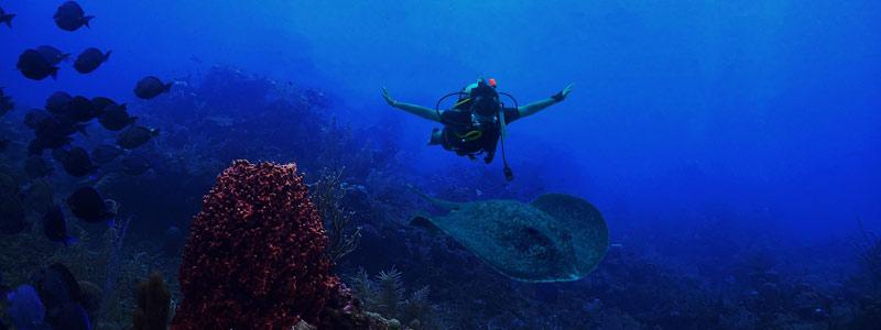 """Обладая природными рифами и более чем 35 затонувшими кораблями, считаясь настоящим """"подводным раем"""